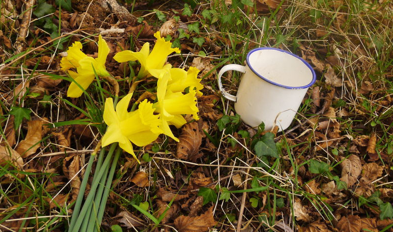 Picking wild daffs