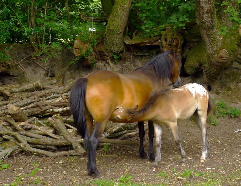 Ponies 19