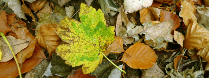 Leaves of the wood
