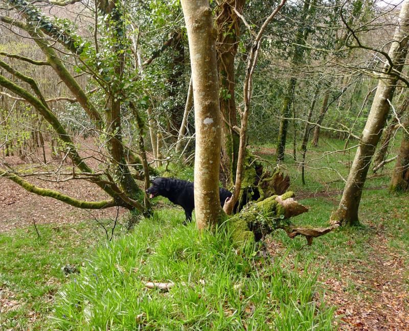 Woods edge 2