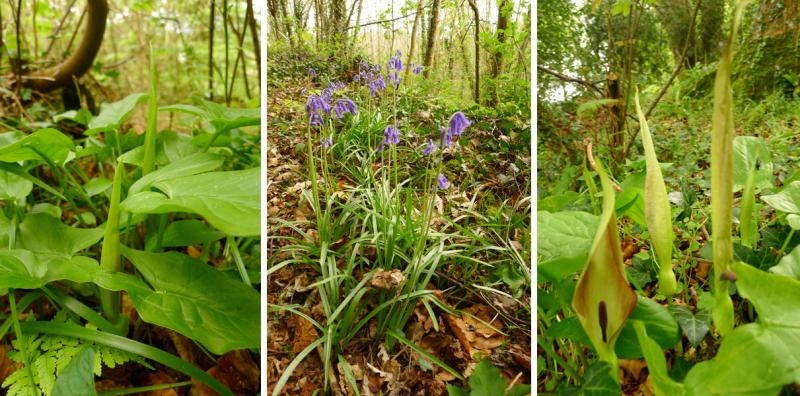 Woodland triptych