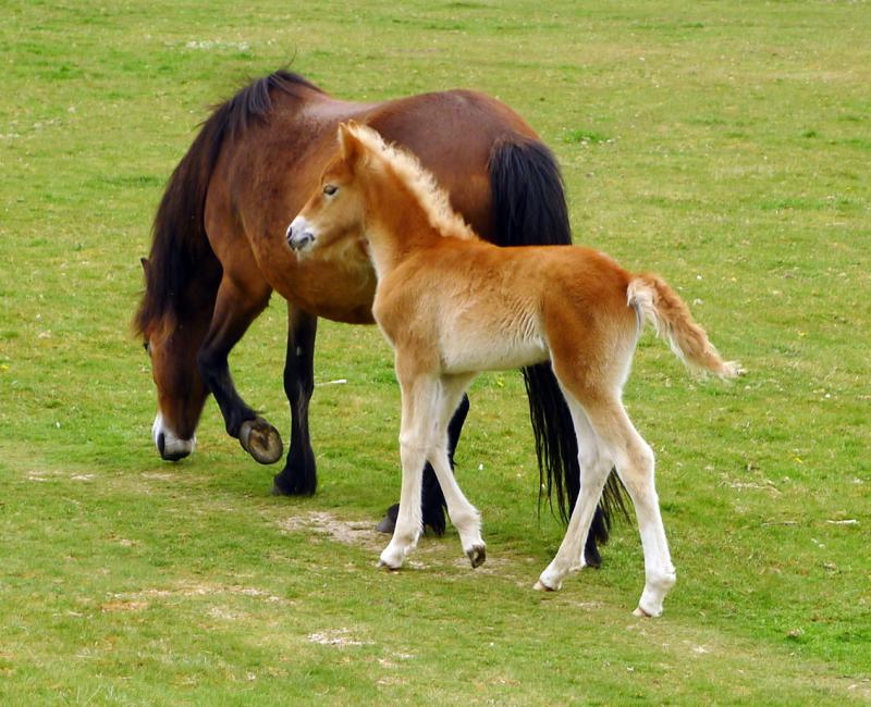 Ponies 8