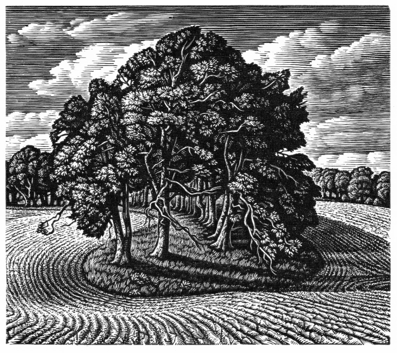 A Beech Shaded Hollow, Cranborne Chase by Howard Phipps