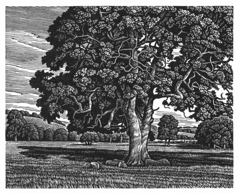 Ebble Valley Oak by Howard Phipps