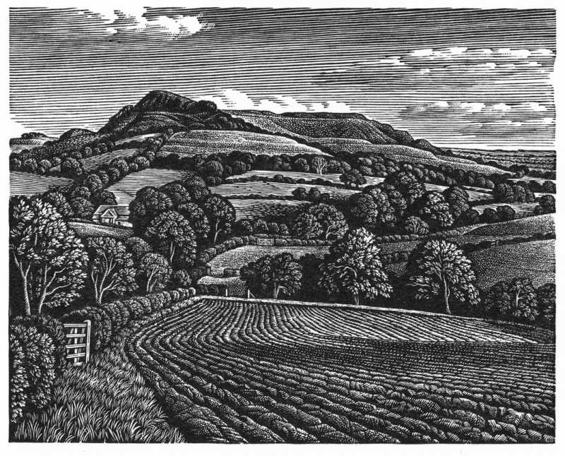 Eggardon Hillfort by Howard Phipps