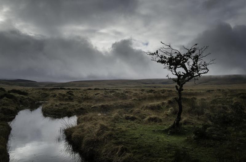 Dartmoor Hawthorn by Simon Blackbourn