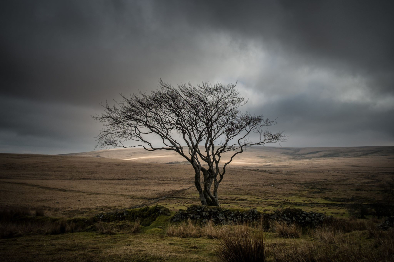 Lone Tree at Fox Tor Mires by Simon Blackbourn