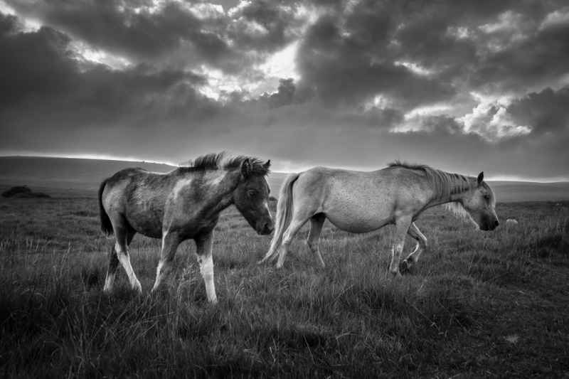 The Freedom of the Moor by Simon Blackbourn