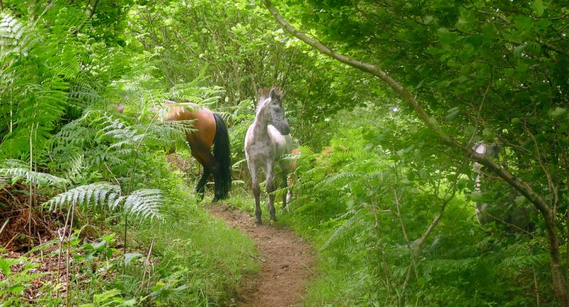 Dream horses 6