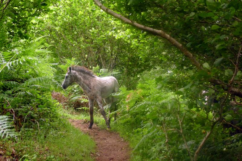 Dream horses 7