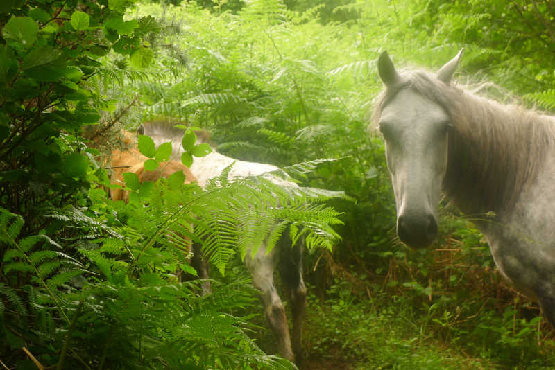 Dream horses 10