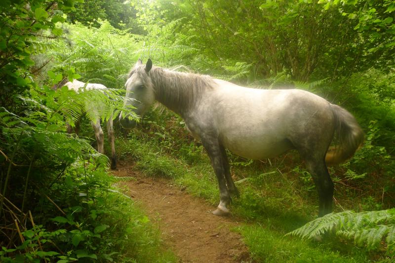 Dream horses 11