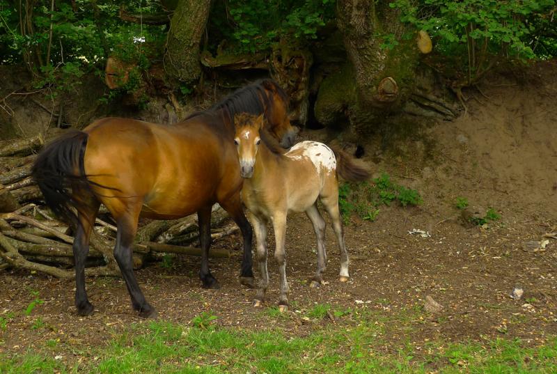 Ponies 21