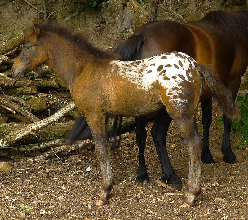 Ponies xx