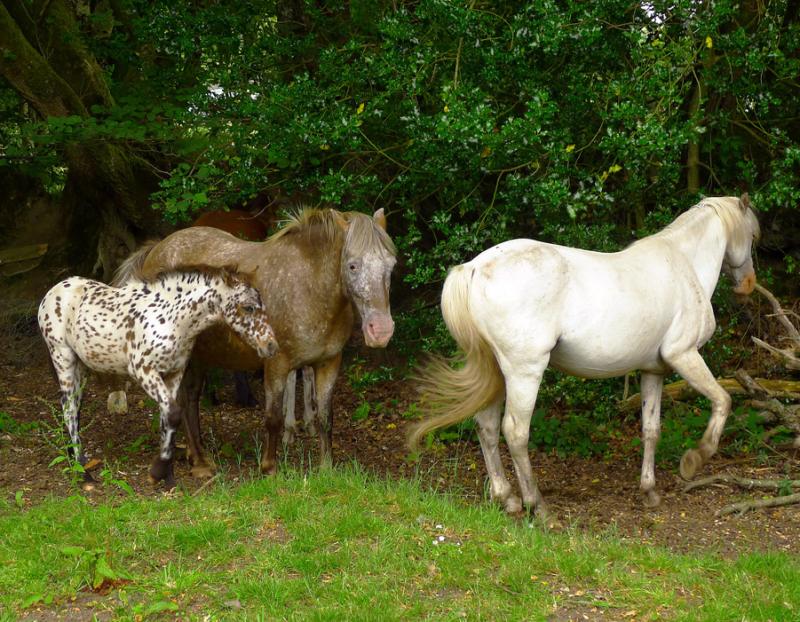 Ponies 22