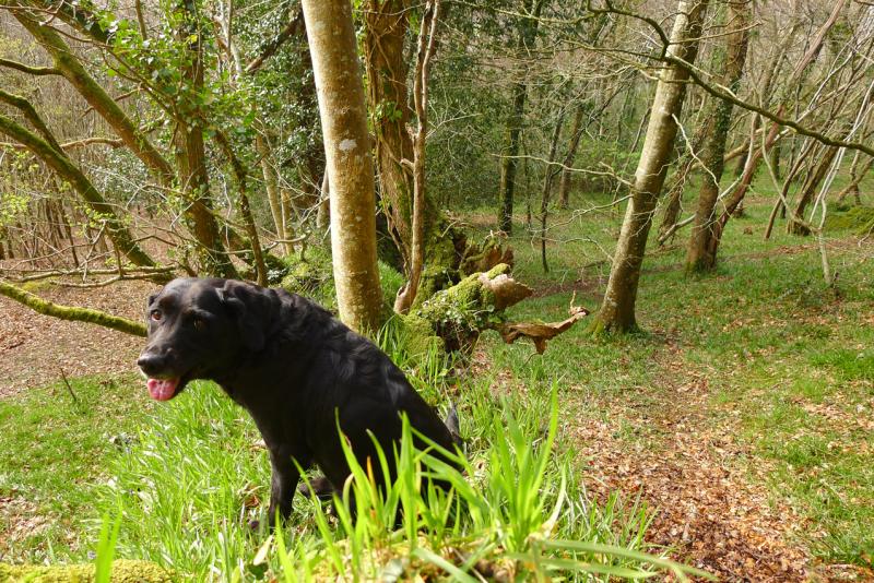 Woods edge 3