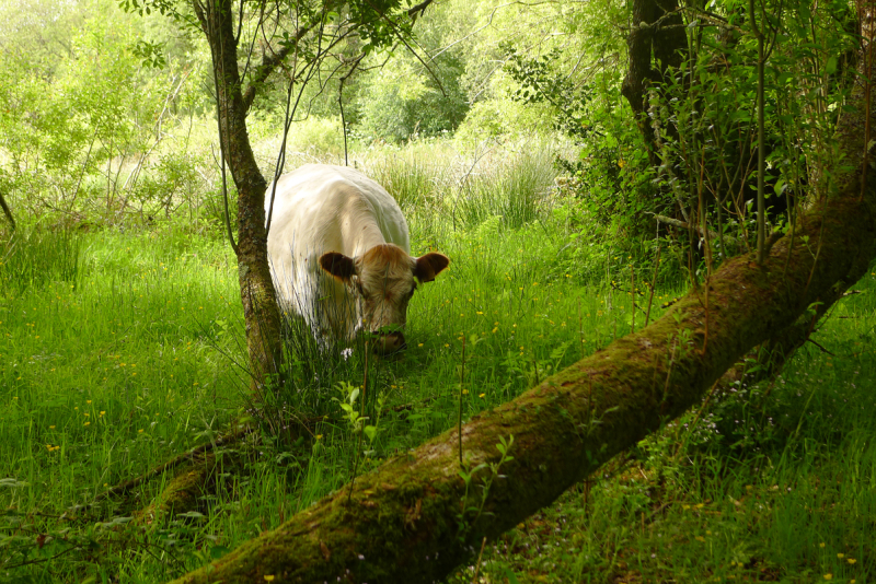 Meadow 8
