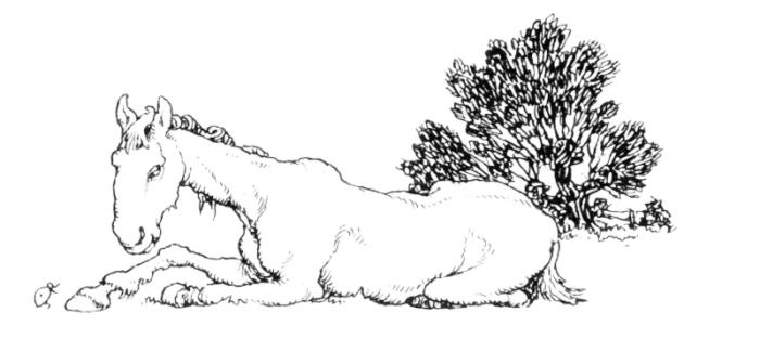 Horse drawing by William Heath Robinson