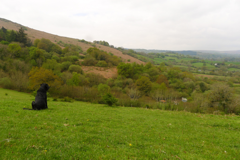 Looking at Meldon Hill from Nattadon Hill