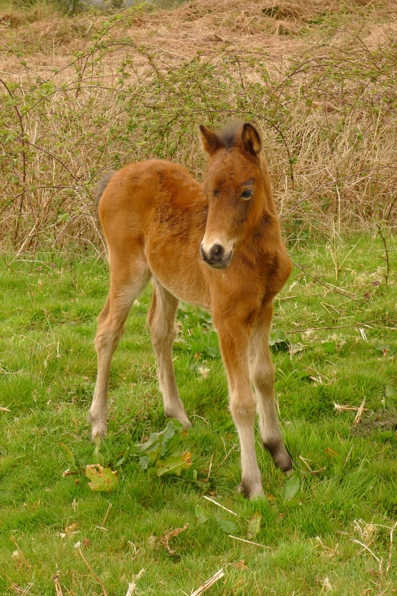 Ponies 15