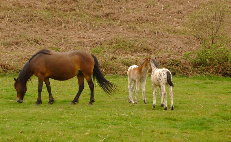 Ponies 6