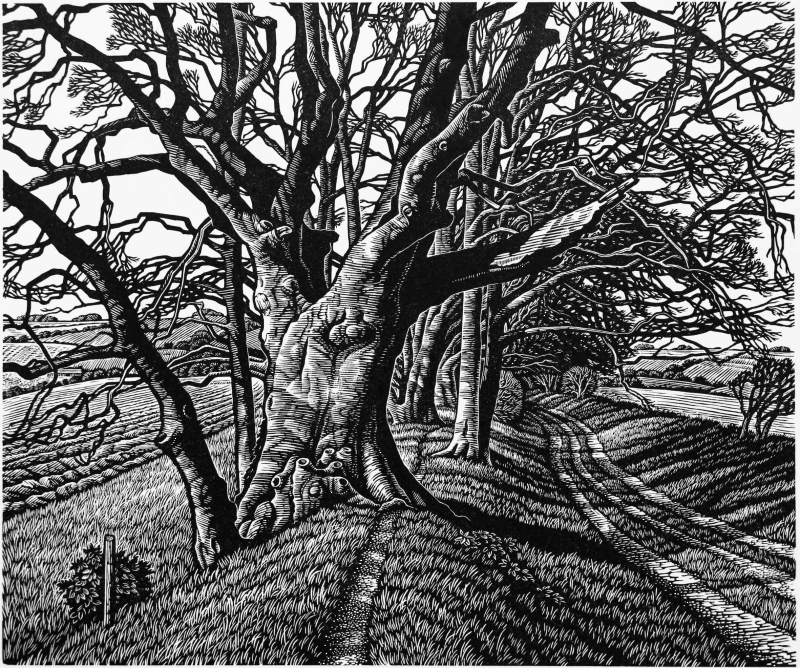 Beech Tree Cloister by Howard Phipps
