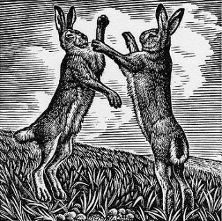 Boxing Hares by Howard Phipps