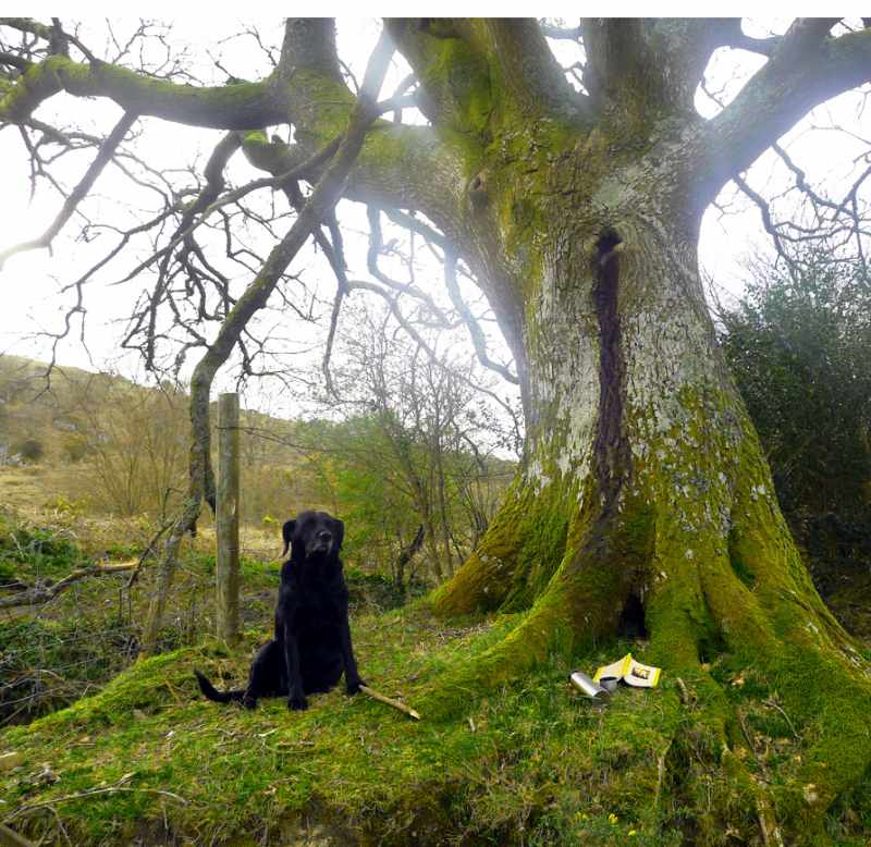 Reading beneath the Oak Elder
