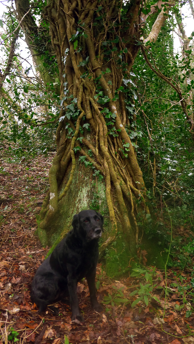 In the tangled heart of a wet winter wood,