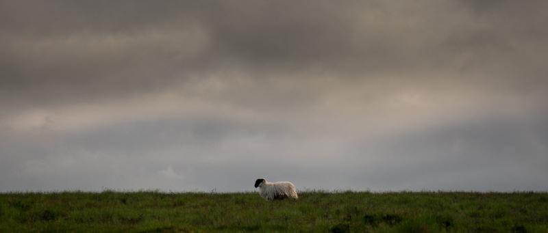I Am Sheep by Simon Blackbourn
