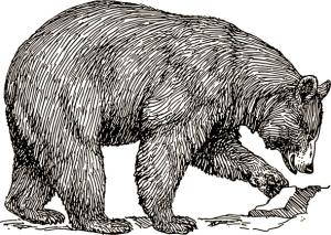 Black bear, artist unknown