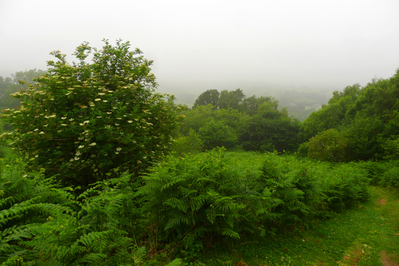 Morning mist on Nattadon Hill