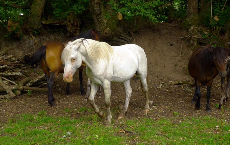 Ponies 18
