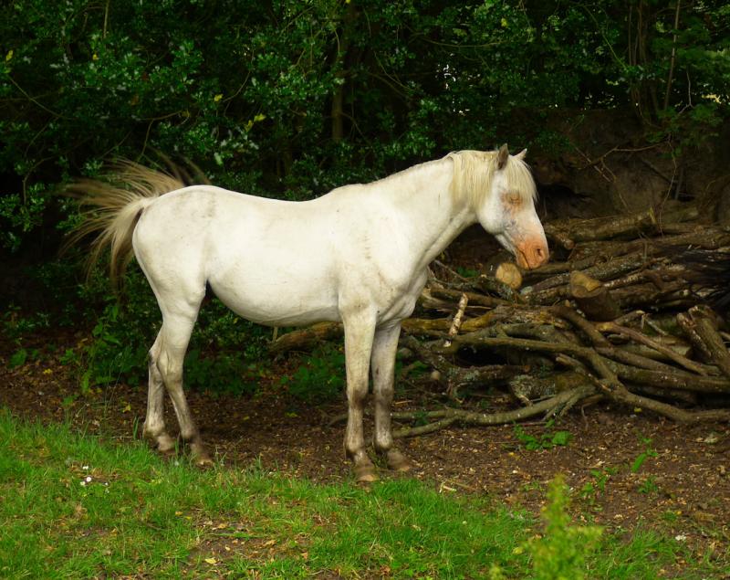 Ponies 20