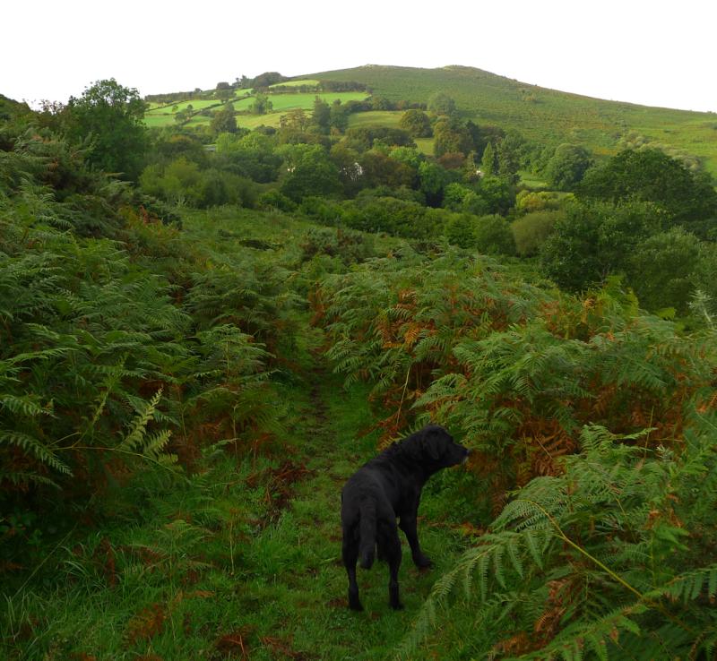 Tilly in autumn bracken