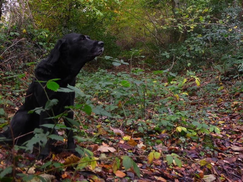 Tilly listening