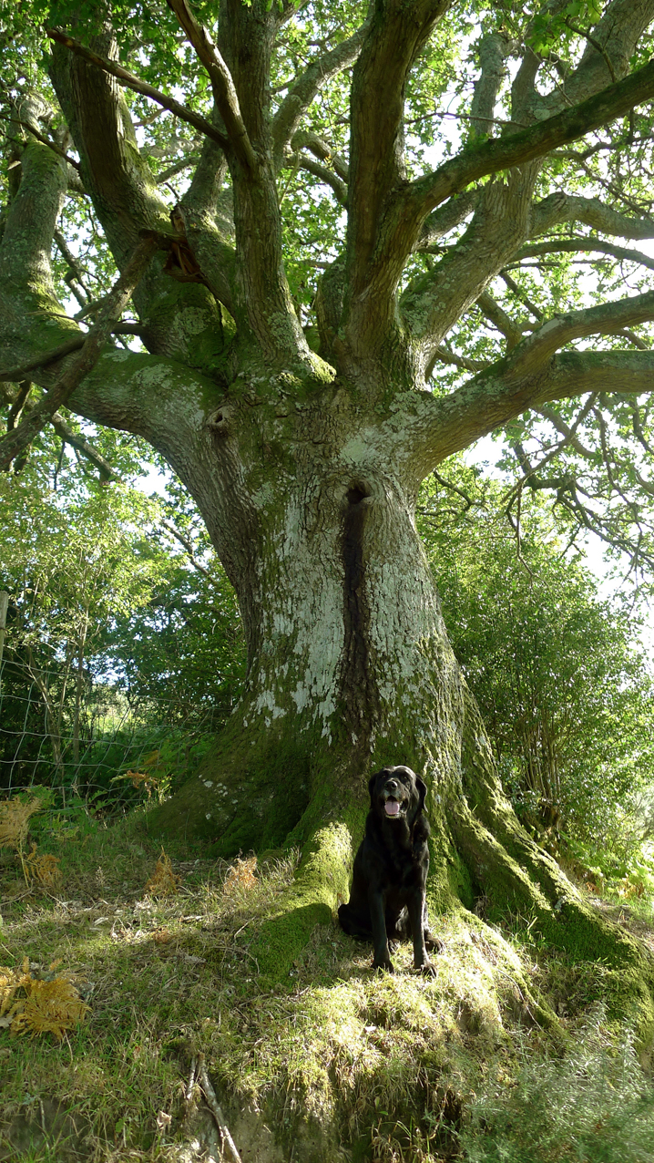 Tilly and the Oak Elder