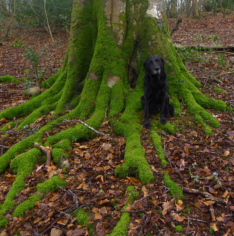 in the silence of moss,