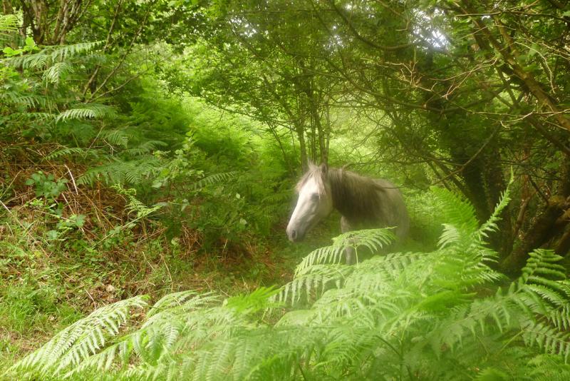 Dream horses 2
