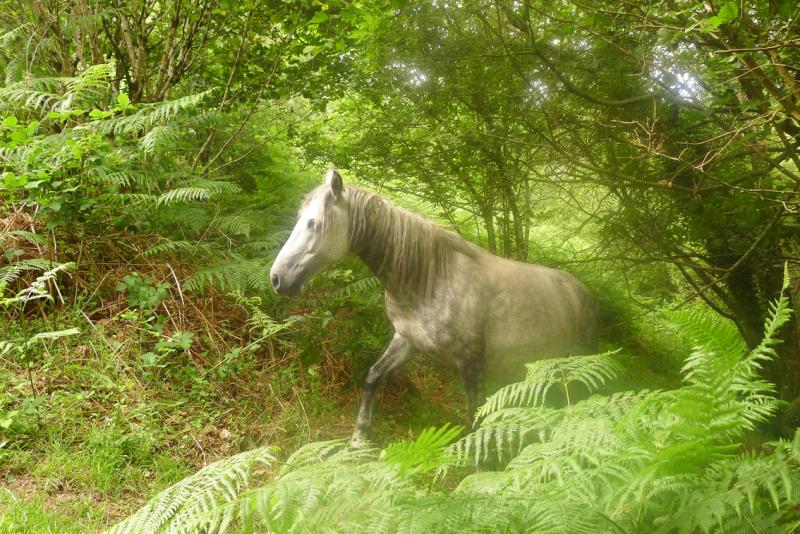 Dream horses 3