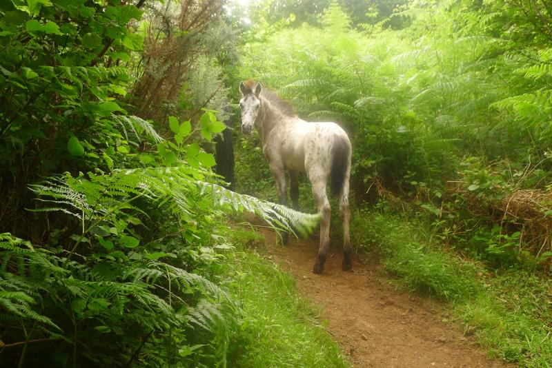 Dream horses 13