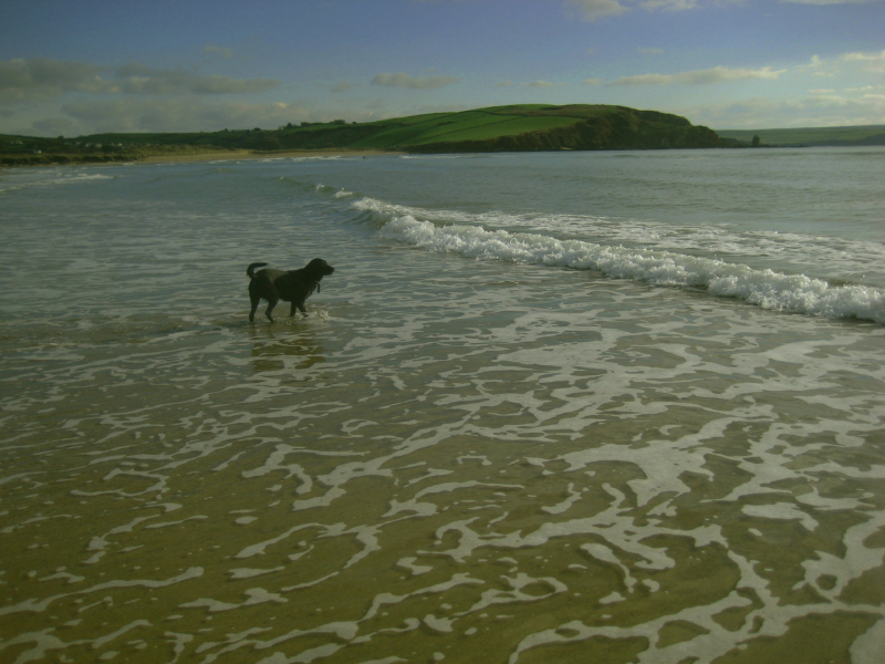 Tilly on the Devon coast