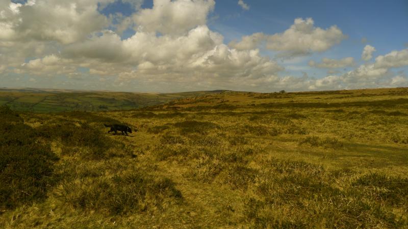 Dartmoor 8