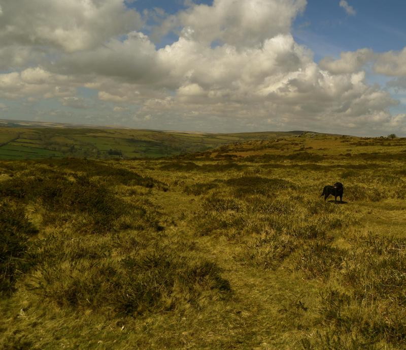 Dartmoor 9
