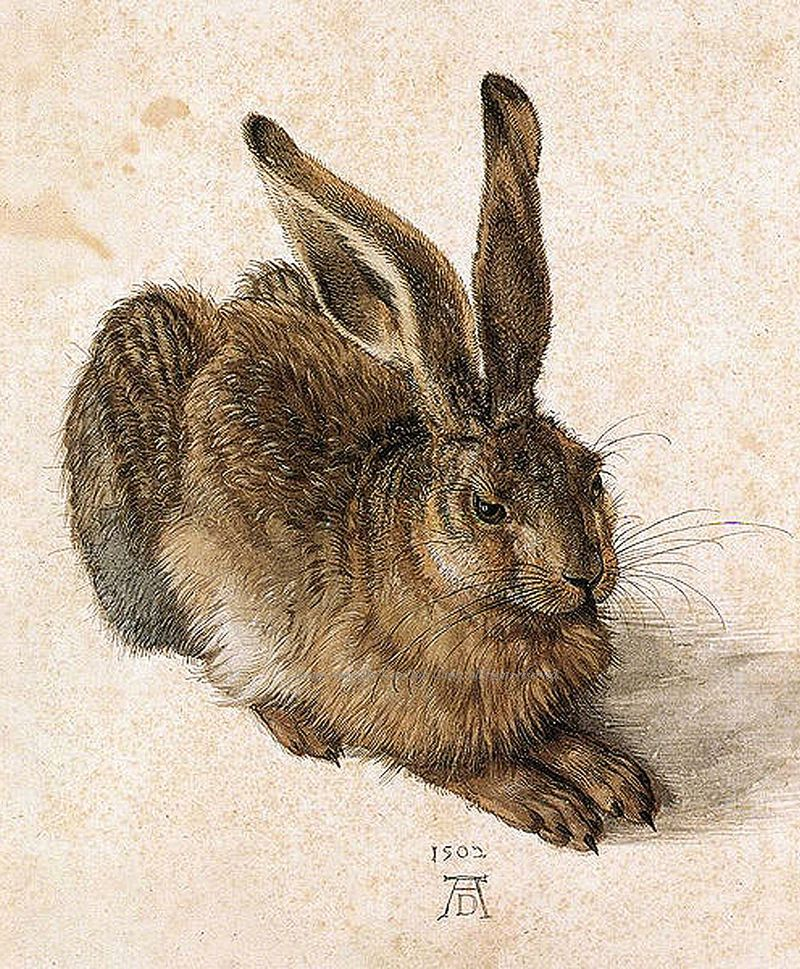 Hare by Albrecht Durer the Younger
