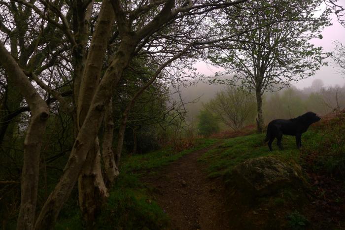 Hound in the mist