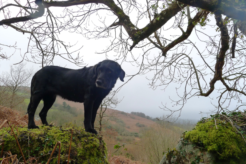 Misty hillside 2