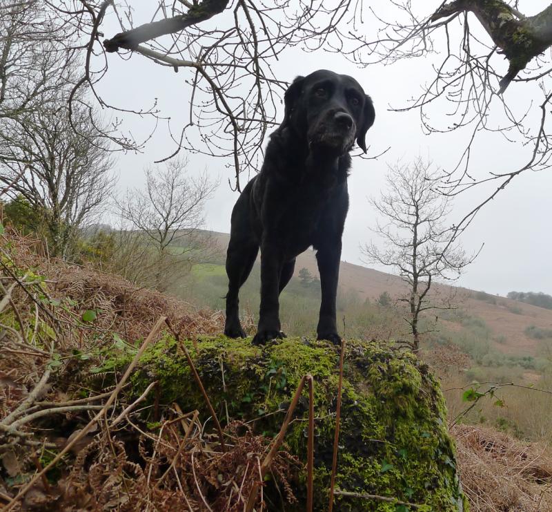Misty hillside 3