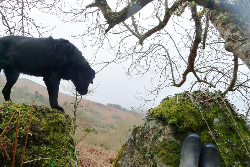 Misty hillside 4
