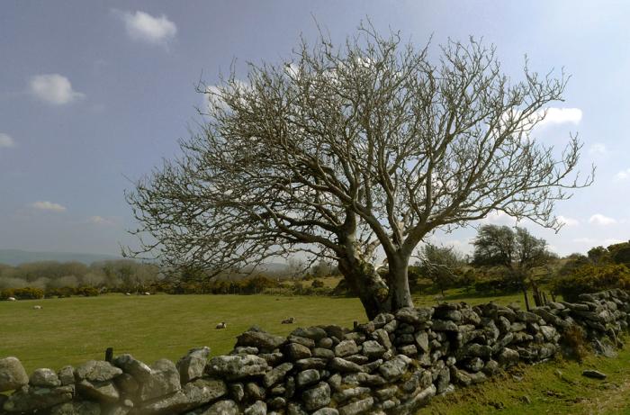 Moorland sheep field
